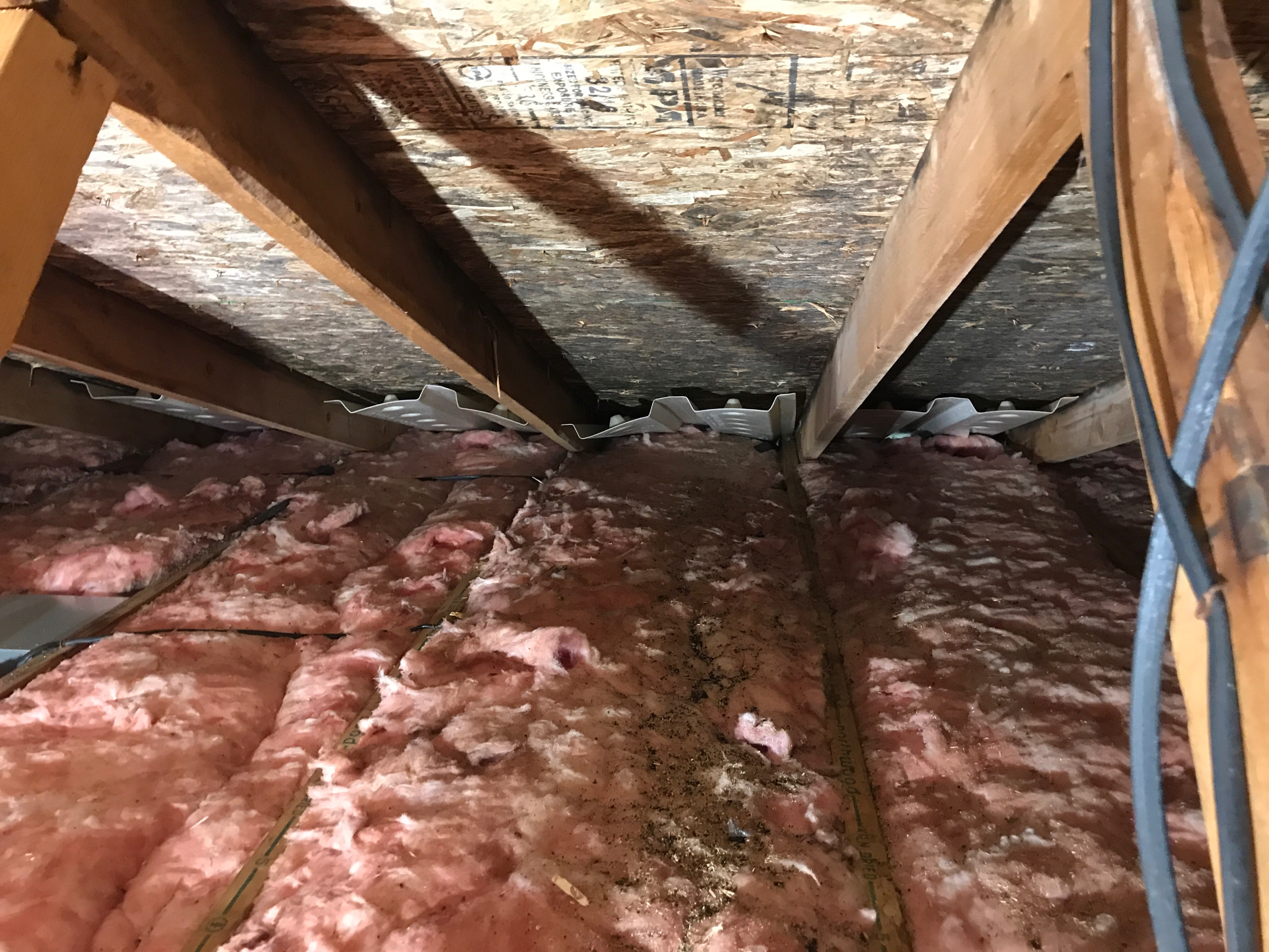 Mold growth in an attic